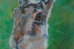 Pastel portrait of Brown Hare