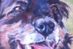 Pastel portrait cross-breed